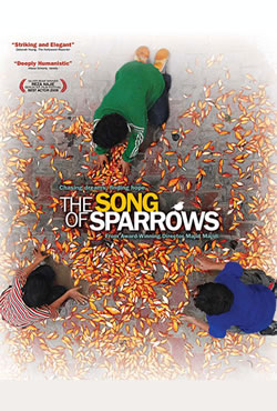 song_of_sparrows
